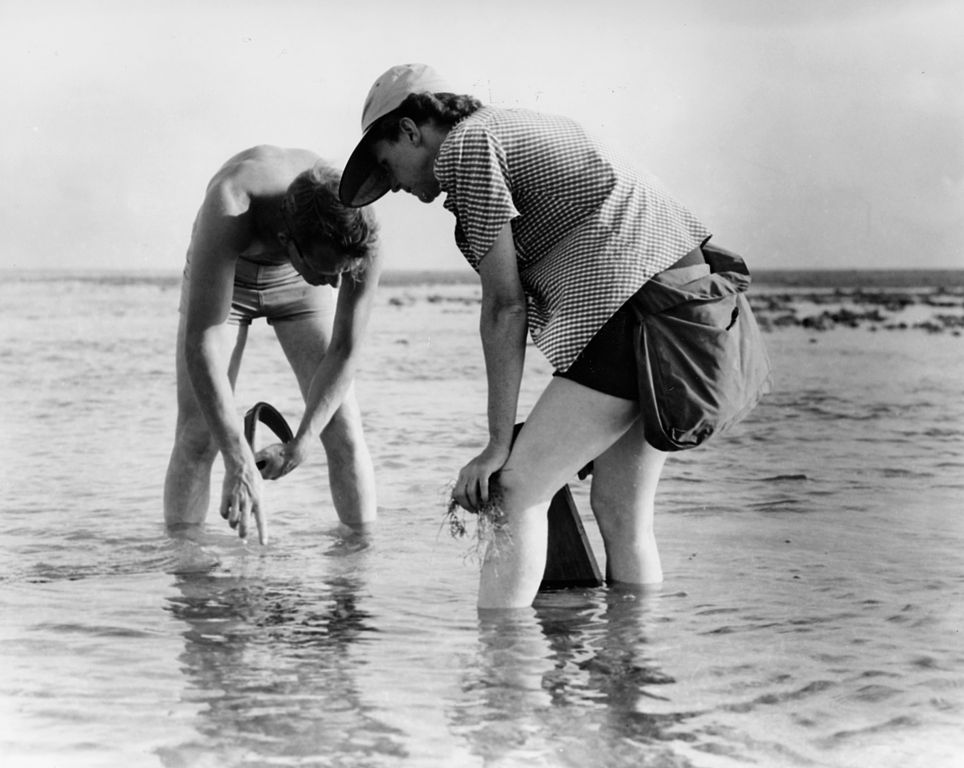 """Rachel Carson Conducts Marine Biology Research with Bob Hines""; courtesy United States Fish and Wildlife Service"